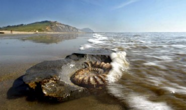 charmouth beach fossil swandown holiday walk sea sun wave water