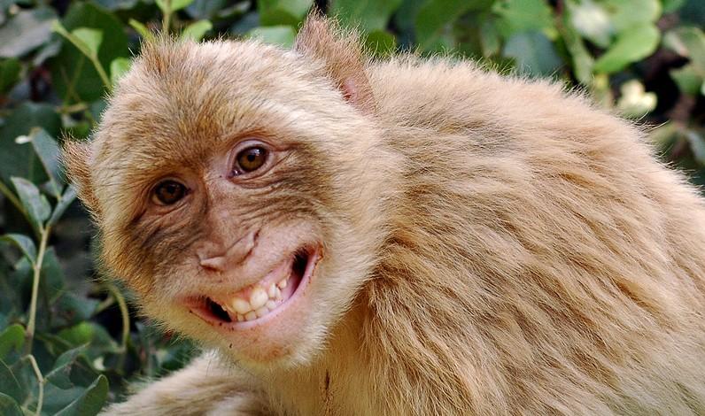 swandown hoseason holiday lodge monkey world ape